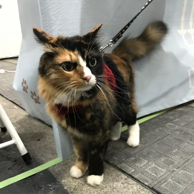 ペット博大阪