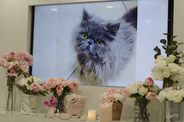 ペットロス 猫